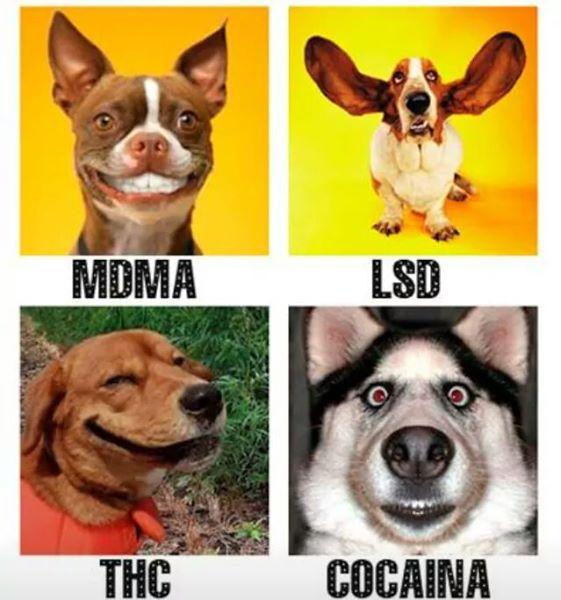 Sustancias