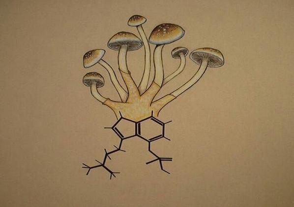 Los hongos y el reino Fungi