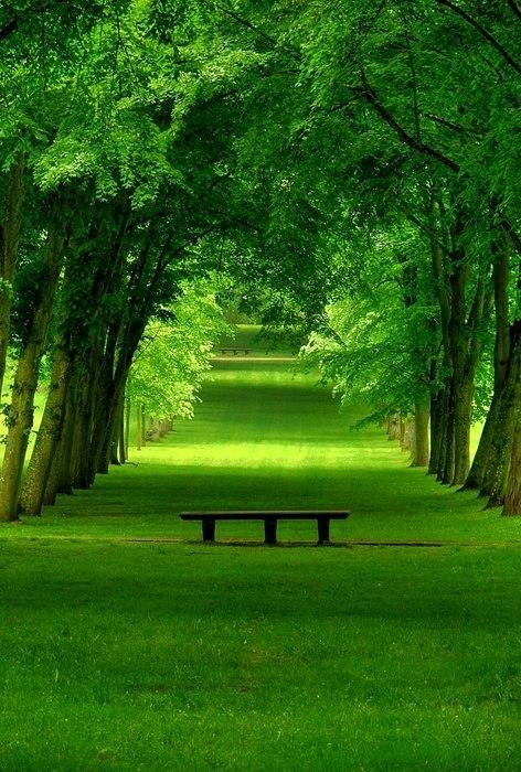 Lush-Green-Park-Chamrande-France