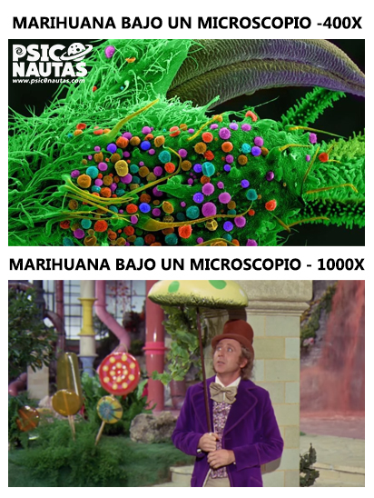Marihuana bajo un microscopio
