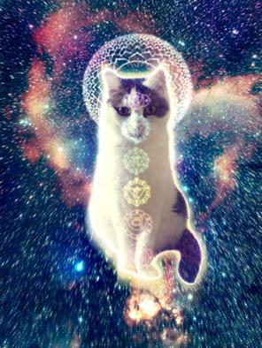 Los gatos: Maestros espirituales