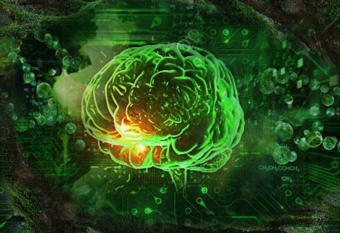 """¿Quién es el creador? La complejidad del cerebro """"está más allá de todo lo imaginado"""""""